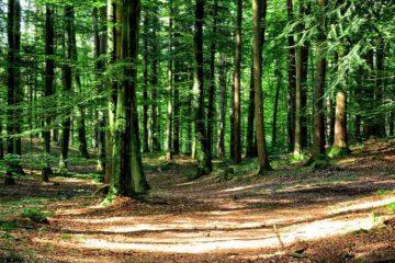 Forêt et impôt sur la fortune immobilière et exonérations