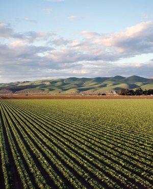 Le droit rural est devenu celui de l'activité agricole et de l'espace rural
