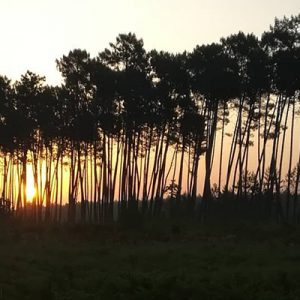 Ruranot, pour les propriétaires forestiers